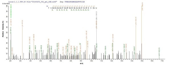 Mass Spectrometry - Recombinant UVSX protein (Tagged) (ab237746)