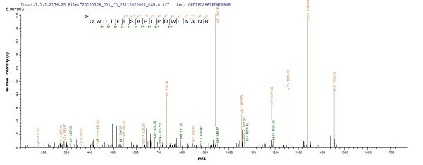 SDS-PAGE - Recombinant Mycobacterium tuberculosis MPT51/MPB51 antigen protein (Tagged) (ab237747)