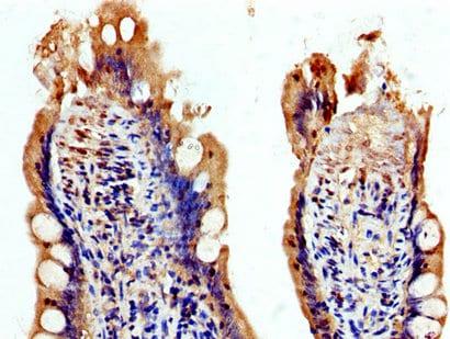 Immunohistochemistry (Formalin/PFA-fixed paraffin-embedded sections) - Anti-USP48 antibody (ab237765)