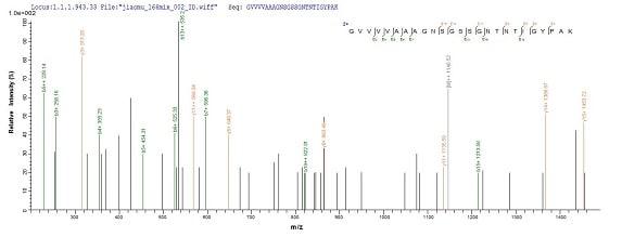 Mass Spectrometry - Recombinant Human Subtilisin Carlsberg protein (Tagged) (ab237794)