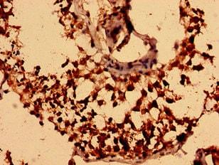 Immunohistochemistry (Formalin/PFA-fixed paraffin-embedded sections) - Anti-NEGR1 antibody (ab237798)
