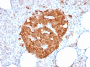 Immunohistochemistry (Formalin/PFA-fixed paraffin-embedded sections) - Anti-XAB1/GPN1 antibody [GPN1/2350] - BSA and Azide free (ab237822)