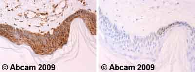 Immunohistochemistry (Formalin/PFA-fixed paraffin-embedded sections) - Anti-Cytochrome C antibody [7H8.2C12] - BSA and Azide free (ab237966)
