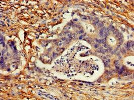 Immunohistochemistry (Formalin/PFA-fixed paraffin-embedded sections) - Anti-p18 INK4c/CDKN2C antibody (ab238108)