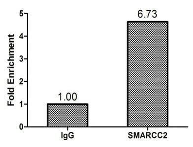 ChIP - Anti-BAF170 antibody (ab238120)