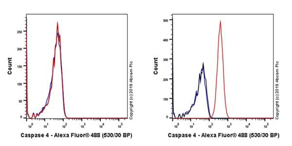 Flow Cytometry (Intracellular) - Anti-Caspase-4 antibody [EPR20921-83] (ab238124)