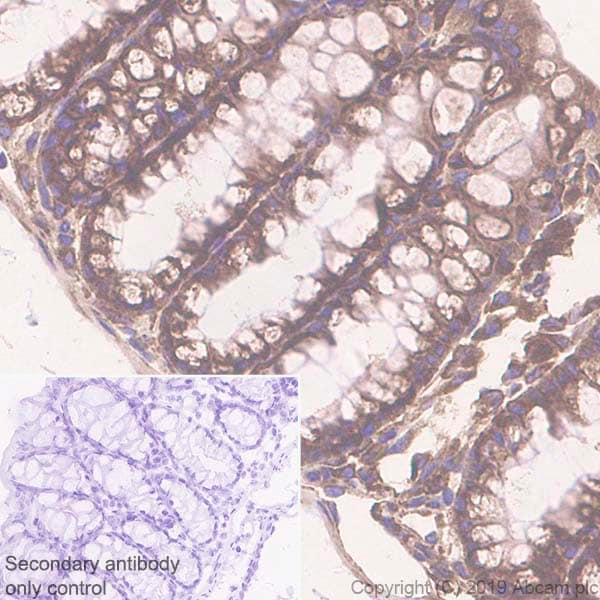 Immunohistochemistry (Formalin/PFA-fixed paraffin-embedded sections) - Anti-GRP94 antibody [EPR22847-50] (ab238126)