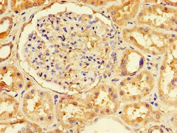 Immunohistochemistry (Formalin/PFA-fixed paraffin-embedded sections) - Anti-NFE2L1 antibody (ab238154)