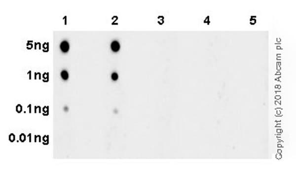 Dot Blot - Anti-IP6K1 (phospho S118 + S121) antibody [EPR19852] - BSA and Azide free (ab238170)