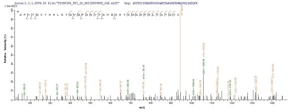 Mass Spectrometry - Recombinant kgp protein (Tagged) (ab238238)
