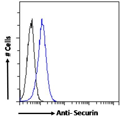 Flow Cytometry - Anti-Securin antibody (ab238247)