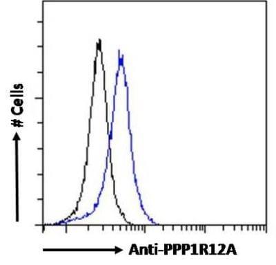 Flow Cytometry - Anti-Myosin Phosphatase antibody (ab238250)