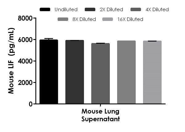Interpolated concentrations of native LIF in mouse lung supernatant samples.