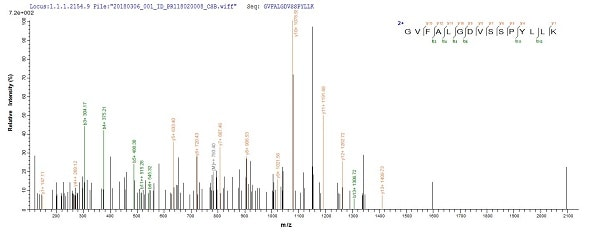 Mass Spectrometry - Recombinant Mycobacterium tuberculosis Mycothione reductase protein (Tagged) (ab238282)