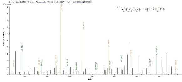 Mass Spectrometry - Recombinant DNA polymerase IV protein (His tag) (ab238377)
