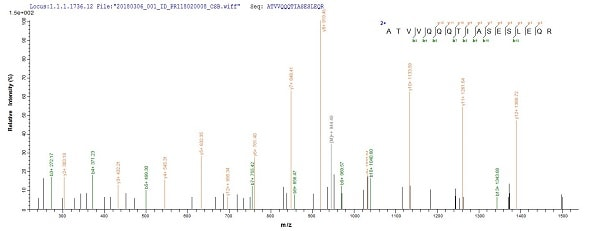Mass Spectrometry - Recombinant Polymerase cofactor VP35 protein (Tagged) (ab238384)