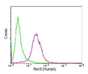 Flow Cytometry - Anti-Rel B antibody [EPR7076] - BSA and Azide free (ab238434)