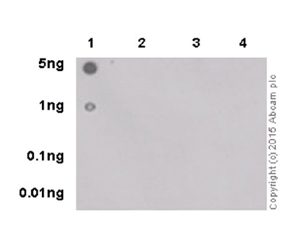 Dot Blot - Anti-RNA polymerase II CTD repeat YSPTSPS (phospho S5) antibody [EPR19015] - BSA and Azide free (ab238449)