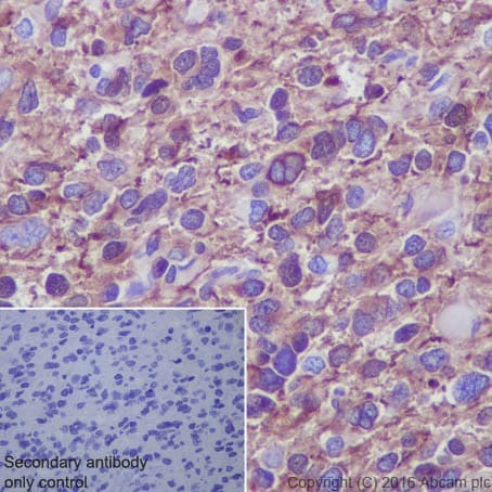 Immunohistochemistry (Formalin/PFA-fixed paraffin-embedded sections) - Anti-beta III Tubulin antibody [EPR19591] - BSA and Azide free (ab238454)