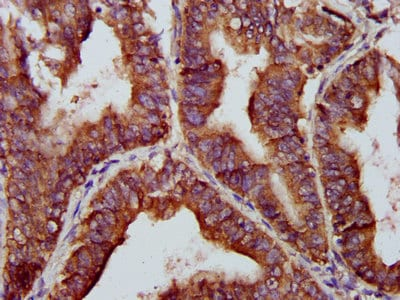Immunohistochemistry (Formalin/PFA-fixed paraffin-embedded sections) - Anti-BRCC45/BRE antibody (ab238493)