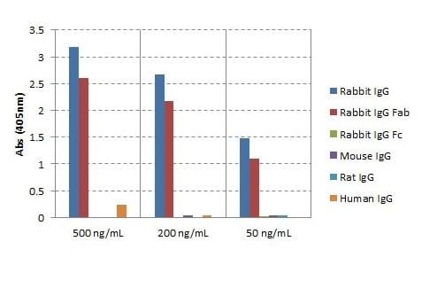 ELISA - Goat monoclonal RMG01 Anti-Rabbit IgG F(ab) (Biotin) (ab238530)