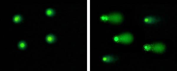 Etoposide Treatment of Jurkat Cells.