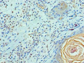 Immunohistochemistry (Formalin/PFA-fixed paraffin-embedded sections) - Anti-Elf4/MEF antibody (ab238573)