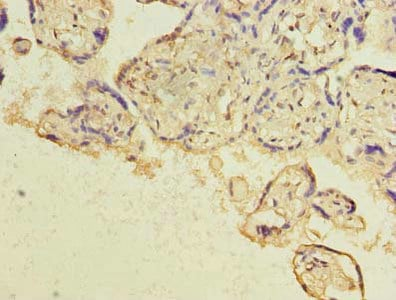 Immunohistochemistry (Formalin/PFA-fixed paraffin-embedded sections) - Anti-HBE antibody (ab238578)