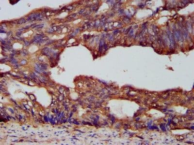 Immunohistochemistry (Formalin/PFA-fixed paraffin-embedded sections) - Anti-PC7 antibody (ab238587)