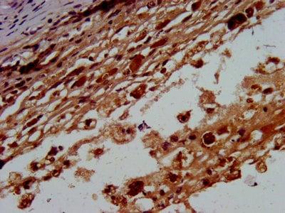 Immunohistochemistry (Formalin/PFA-fixed paraffin-embedded sections) - Anti-BTD antibody (ab238611)