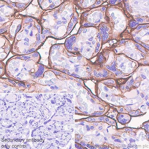 Immunohistochemistry (Formalin/PFA-fixed paraffin-embedded sections) - Anti-CD33 antibody [SP266] - BSA and Azide free (ab238784)