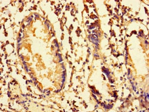 Immunohistochemistry (Formalin/PFA-fixed paraffin-embedded sections) - Anti-MRPS28 antibody (ab238861)