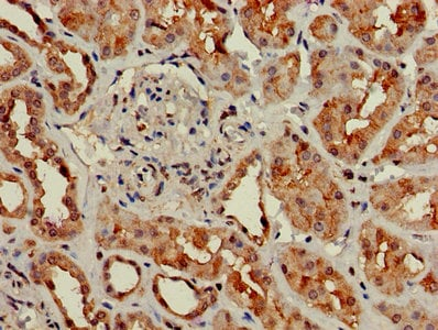 Immunohistochemistry (Formalin/PFA-fixed paraffin-embedded sections) - Anti-GNG4 antibody (ab238868)