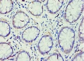 Immunohistochemistry (Formalin/PFA-fixed paraffin-embedded sections) - Anti-GRAF antibody (ab238883)