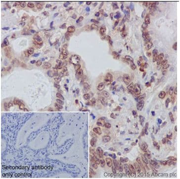 Immunohistochemistry (Formalin/PFA-fixed paraffin-embedded sections) - Anti-AKT1 + AKT2 antibody [EPR18405] - BSA and Azide free (ab238944)