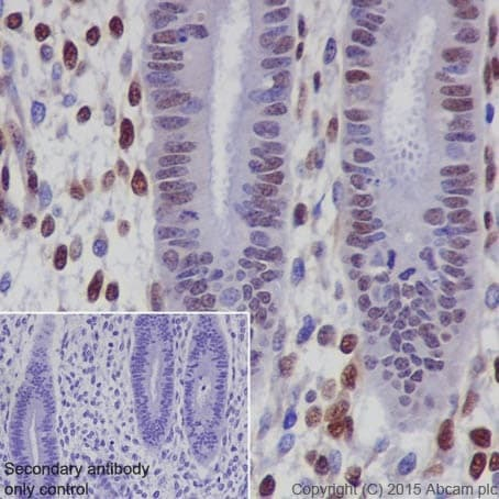 Immunohistochemistry (Formalin/PFA-fixed paraffin-embedded sections) - Anti-CIRP antibody [EPR18783] - BSA and Azide free (ab238946)