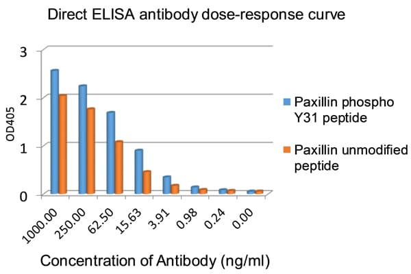 ELISA - Anti-Paxillin antibody [E228] - BSA and Azide free (ab238950)