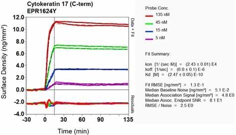 Other - Anti-Cytokeratin 17 antibody [EPR1624Y] - BSA and Azide free (ab238953)