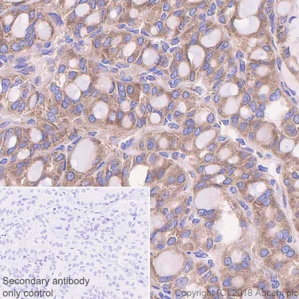 Immunohistochemistry (Formalin/PFA-fixed paraffin-embedded sections) - Anti-STIP1/STI1 antibody [EPR6605] - BSA and Azide free (ab238963)