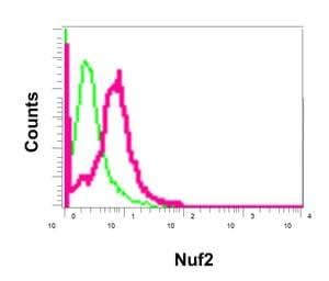 Flow Cytometry - Anti-Nuf2 antibody [EPR13018(B)] - BSA and Azide free (ab238970)