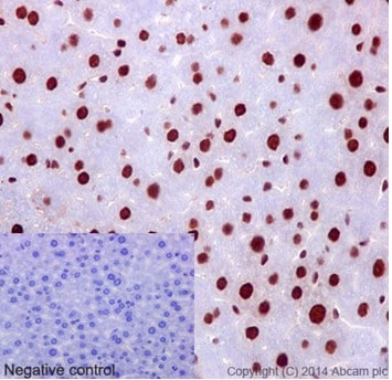 Immunohistochemistry (Formalin/PFA-fixed paraffin-embedded sections) - Anti-hnRNP G antibody [EPR16038] - BSA and Azide free (ab238987)