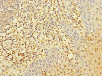 Immunohistochemistry (Formalin/PFA-fixed paraffin-embedded sections) - Anti-RGS10 antibody (ab239018)