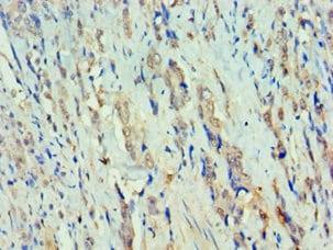 Immunohistochemistry (Formalin/PFA-fixed paraffin-embedded sections) - Anti-RFX5 antibody (ab239038)