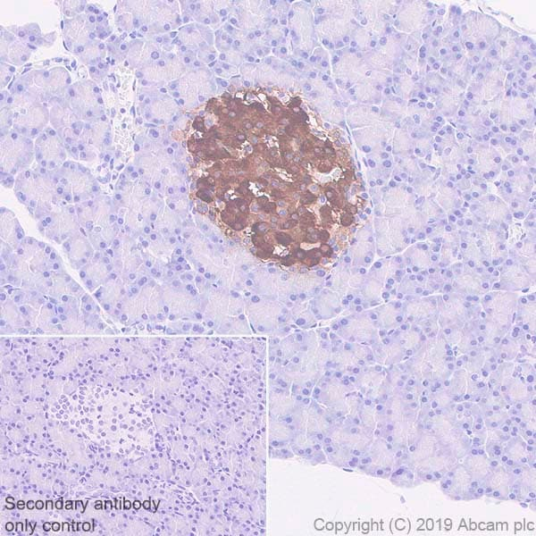 Immunohistochemistry (Formalin/PFA-fixed paraffin-embedded sections) - Anti-GAD65 antibody [EPR22952-70] (ab239372)
