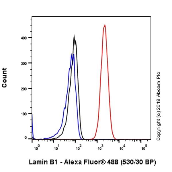 Flow Cytometry - Anti-Lamin B1 antibody [EPR22165-121] - BSA and Azide free (ab239399)