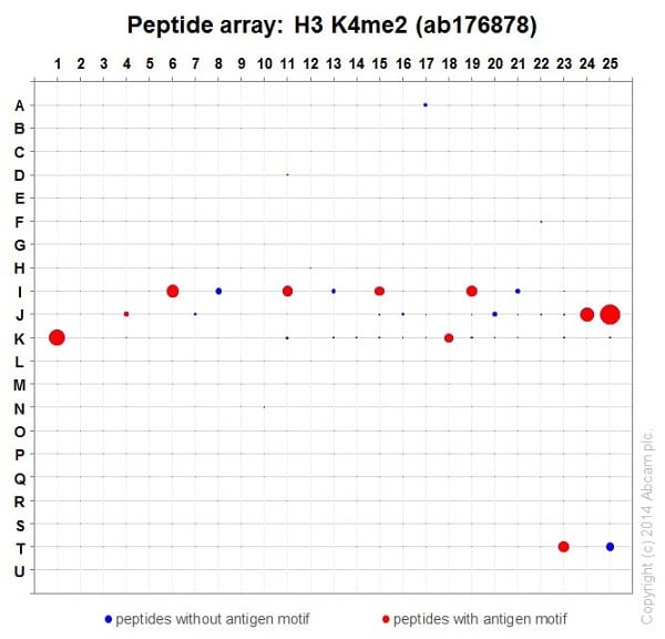 Peptide Array - Anti-Histone H3 (di methyl K4) antibody [EPR17707] - BSA and Azide free (ab239406)
