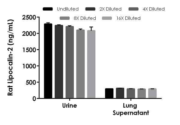 Interpolated concentrations of native Lipocalin-2 in rat urine and lung supernatant samples.