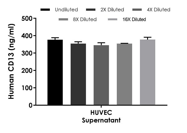 Interpolated concentrations of native CD13 in human HUVEC cell culture supernatant samples.