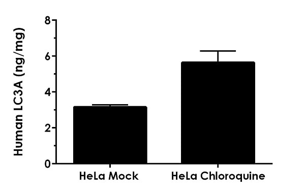 Comparison of LC3A in mock-treated and chloroquine-treated HeLa cell extracts.