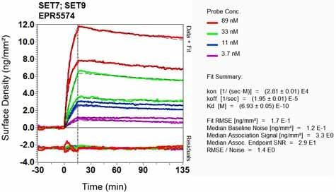 Other - Anti-SET7 antibody [EPR5574] - BSA and Azide free (ab239434)